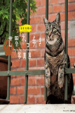 [DVD] 岩合光昭の世界ネコ歩き【完全版】(初回生産限定版)