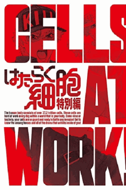 [DVD] はたらく細胞 特別編